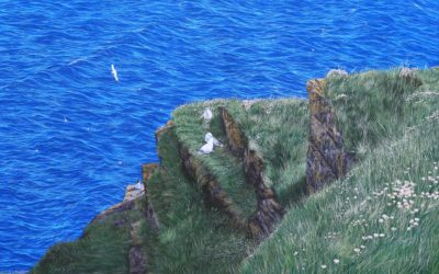 """Bird Haven Near to Duncansby Stacks"""