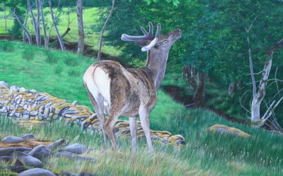 """Deer browsing the leaves at Applecross"""
